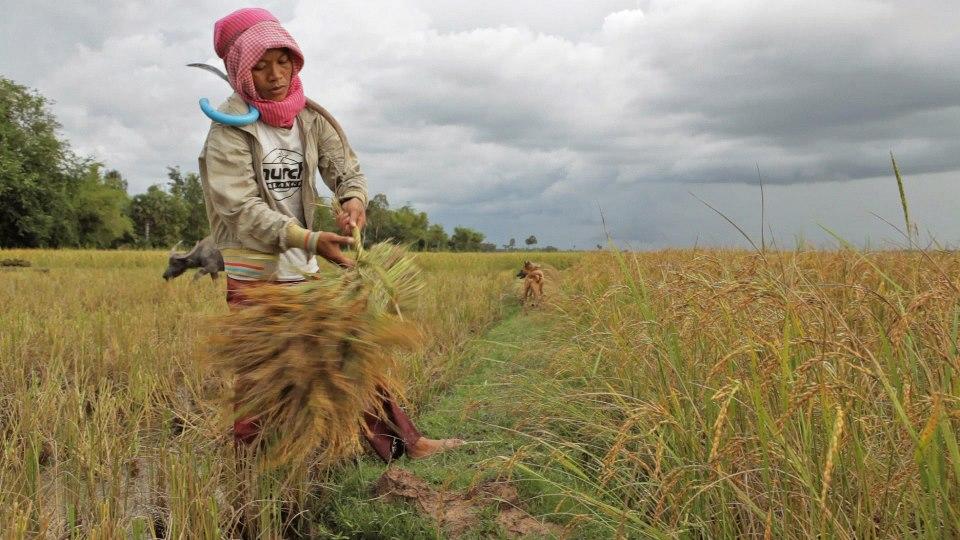 Kalyanee Mam's A RIVER CHANGES COURSE - Khieu Mok