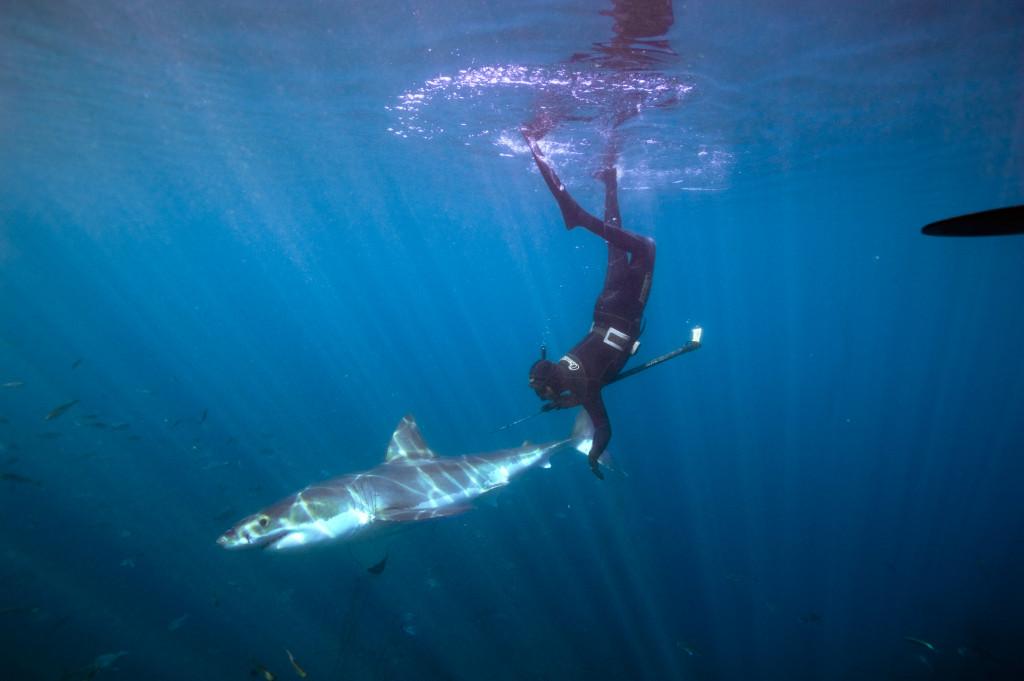 GREAT WHITE SHARK, GREAT WHITE SHARK MOVIE, GREAT WHITE SHARK REVIEW, ANDREW BRUSENTSEV, Luke Cresswell, Steve McNicholas, Bill Nighy, JAWS, D.J. Roller, David Marks, Don Kempf, Giant Screen Films, IMAX