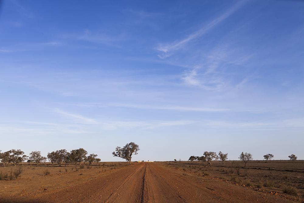 Emu Runner Rural Australia