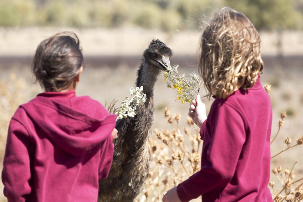 Emu Runner Movie image